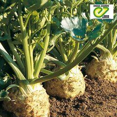 Ибис семена сельдерея (Enza Zaden / Энза Заден)