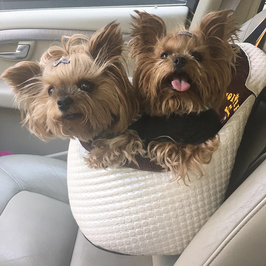 Сидения для маленькой собаки в машине