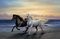 Алмазная Мозаика + Багет 40x50 Белый и черный конь на берегу