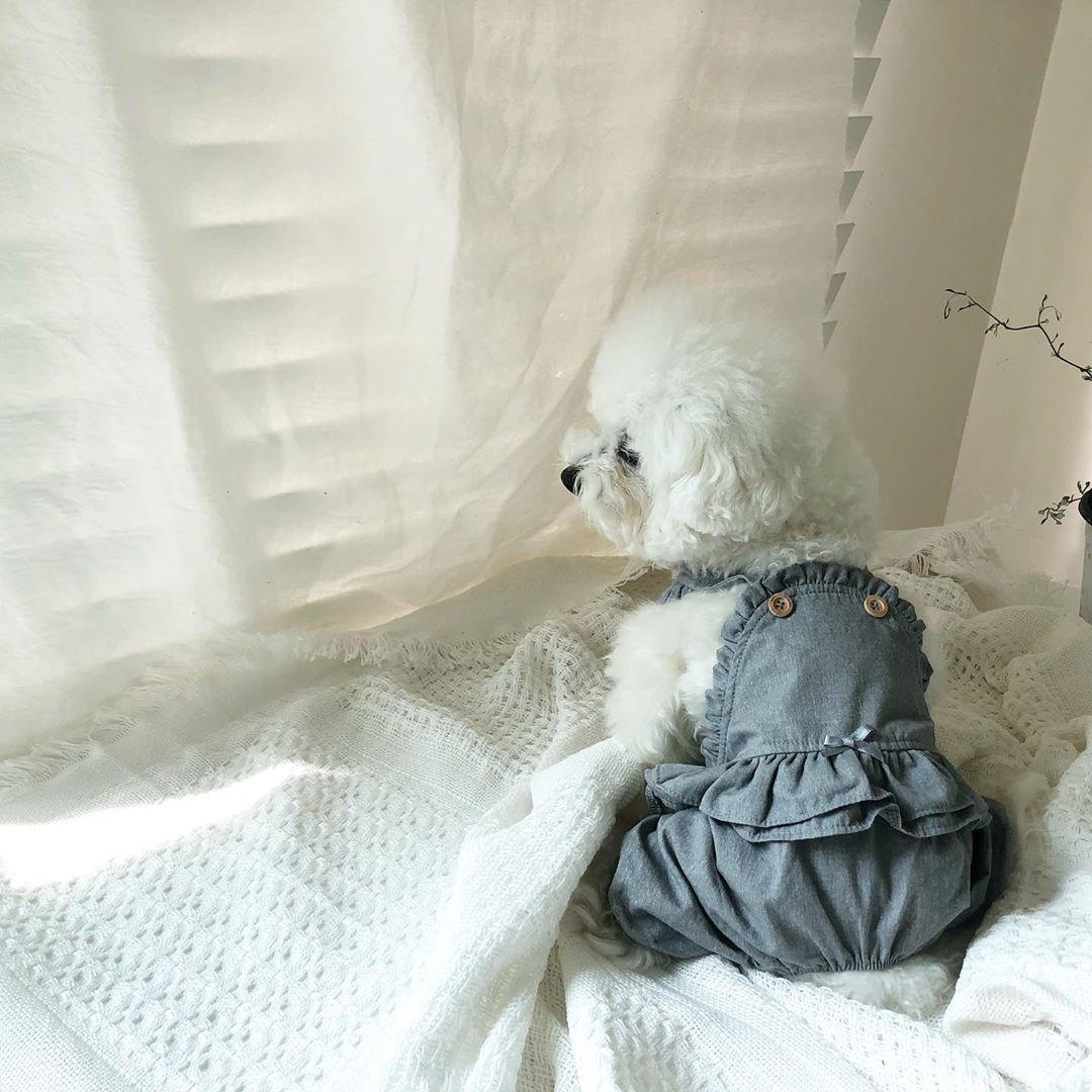 летняя одежда для собак puppyangel