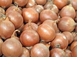 Репчатый Моушен F1 семена лука репчатого (Syngenta / Сингента) Моушен_F1.jpg