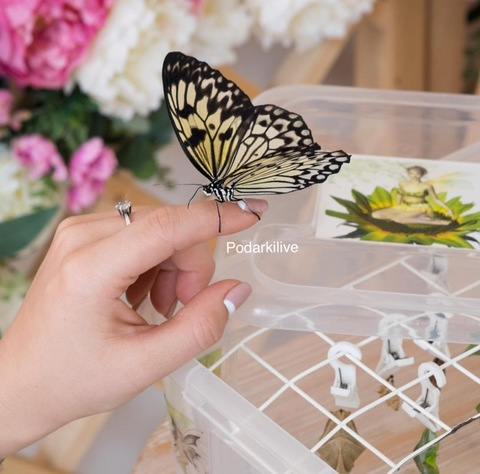 Одна бабочка (цвет в ассортименте)