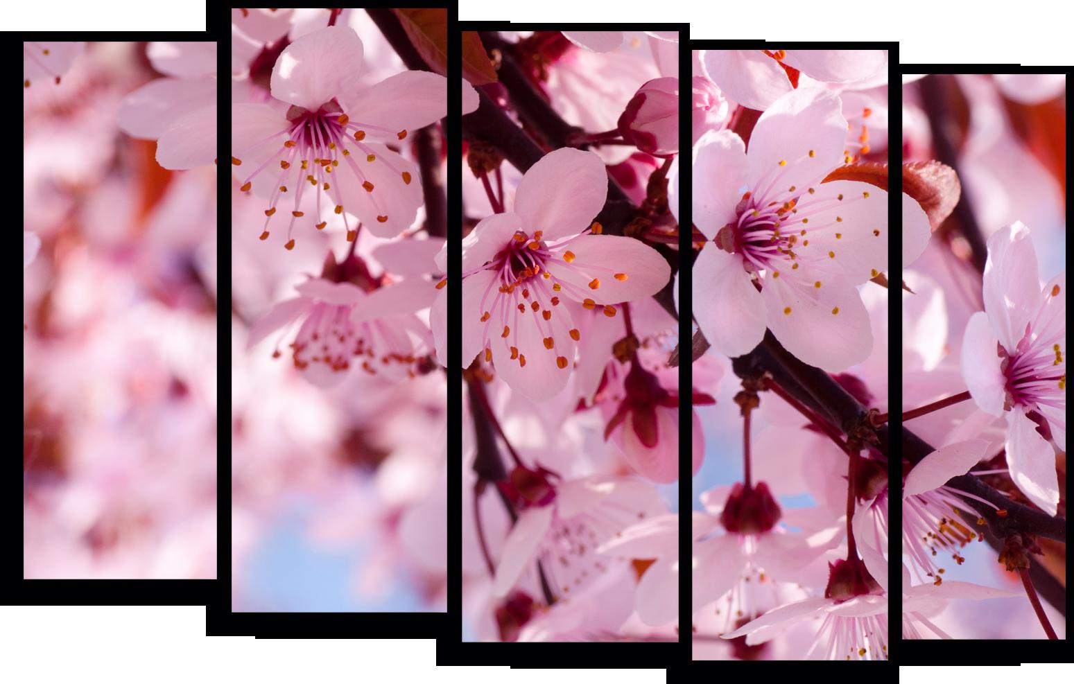 """Цветы Модульная картина """"Цветы вишни"""" М788.png"""