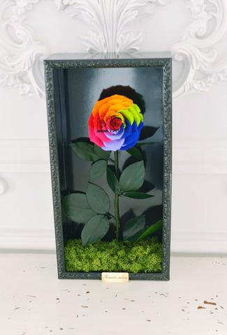 Стабилизированная Роза в Картине Premium Оптом Размер*Бутон (44х22х8см*11см) Цвет биколор