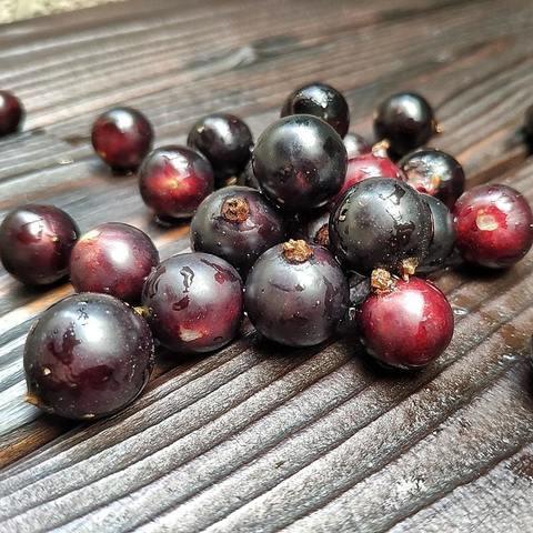 Фотография Смородина черная свежая / 5 кг купить в магазине Афлора