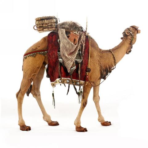 Верблюд Королевский в красной попоне