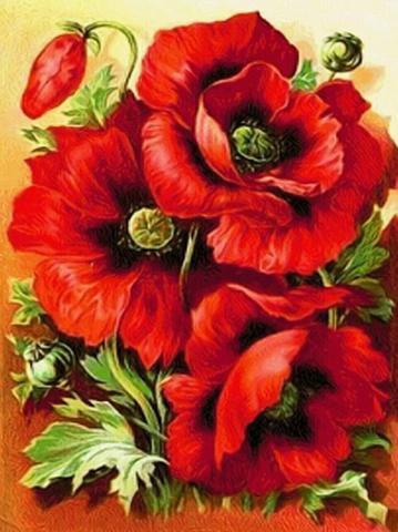 Картина раскраска по номерам 30x40 Три цветка мака вблизи